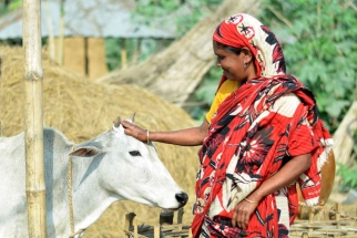 Source: Akram Ali/CARE Bangladesh Strengthening the Dairy Value Chain (SDVC) project