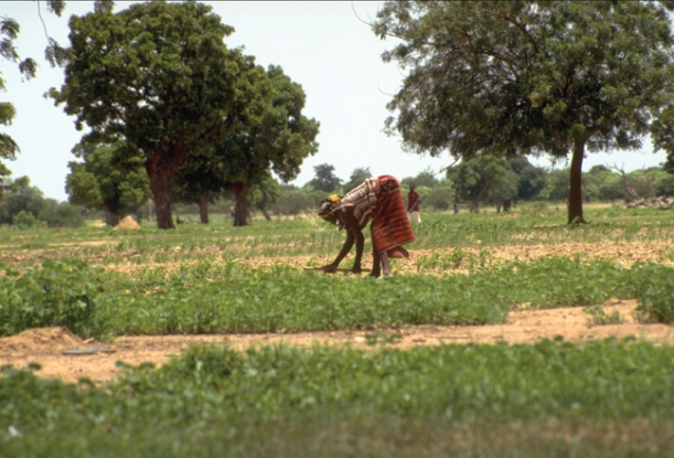 Photo: Alison Slack. Source: Flickr (IFPRI Images)