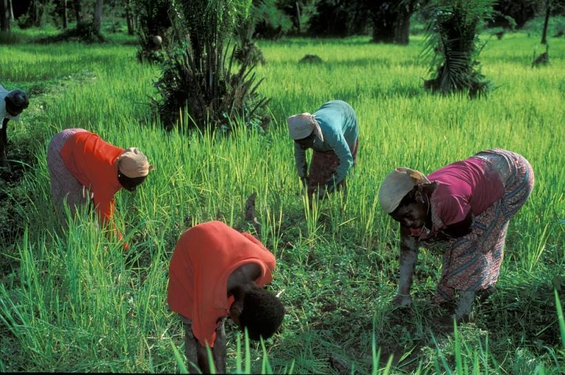 Working in the field. Ghana. Photo Credit: Curt Carnemark / World Bank